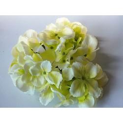 Hortenzie - Květ Zelená