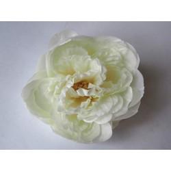 Pivoňka - bílá květ