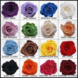 Stabilizovaná růže -...