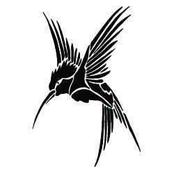 Kolibřík střední
