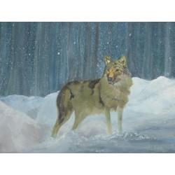 Vlk na sněhu