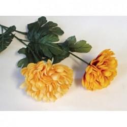 Chryzantéma - Velká