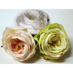 Růže květ - Vera  - 8c