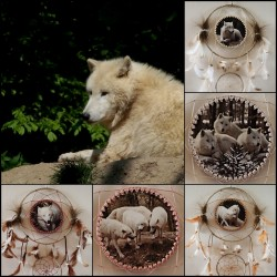 "White Wolf  ,,Vlci ze ZOO"" I"